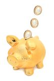 Piggy bank. Stock Photo