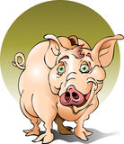 Piggy Bank. This is a Piggy Bank for the big savers.  This hog is hungry Stock Image