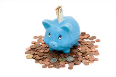 Piggy Bank. With white background Royalty Free Stock Image