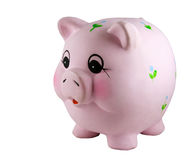 Piggy Bank. Isolated in white royalty free stock image