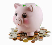 Free Piggy Bank Royalty Free Stock Photos - 5994668