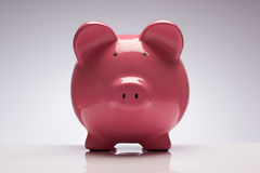 Piggy bank. Pink pig money box stock photo