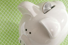 Piggy Bank against Green Background. White ceramic piggy bank against a green decorative background Stock Images