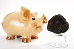 Piggy bank and Black Truffle Royalty Free Stock Image