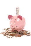 Piggy bank with British currency money Royalty Free Stock Image