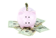 Piggy Bank and Cash Stock Images