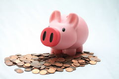 Piggy bank on cents Stock Photography