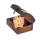 Piggy bank in chest Stock Image