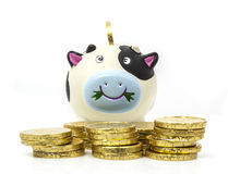 Piggy bank with chocolate coins Stock Photography