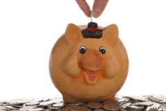 Piggy bank on coins Royalty Free Stock Photography