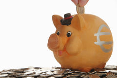 Piggy bank on coins Stock Photos