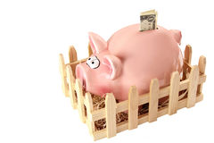 Piggy bank with dollar Stock Image