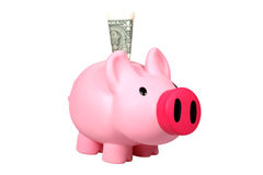 Piggy bank with Dollar banknotes Royalty Free Stock Image