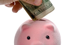 Piggy bank and dollars Stock Photography