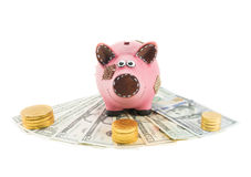 Piggy bank with dollars Stock Photography