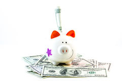 Piggy bank with dollars Stock Photo
