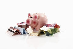 Piggy bank with euro notes and Swiss francs Royalty Free Stock Image