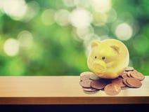Piggy bank and gold coins Stock Photos