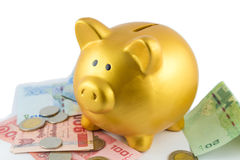 Piggy bank in gold color on bank and coin Stock Photos
