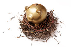 Piggy bank. Golden piggy bank in nest on white background Royalty Free Stock Image