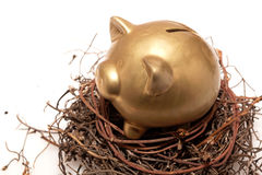 Piggy bank. Golden piggy bank in nest on white background Royalty Free Stock Images