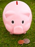 Piggy Bank Grazing Stock Image