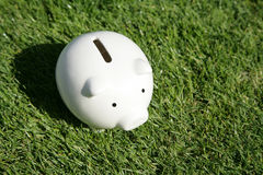 Piggy Bank and green grass Royalty Free Stock Photography