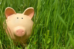 Piggy bank in green grass Stock Photo