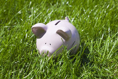 Piggy bank in green grass. Field Royalty Free Stock Photography