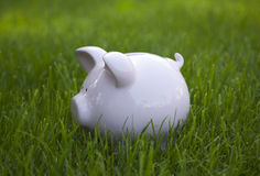 Piggy bank in green grass Royalty Free Stock Image