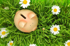 Piggy bank on green grass with flowers. Background Royalty Free Stock Photos