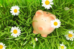 Piggy bank on green grass with flowers. Background Stock Photography