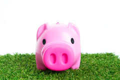 Piggy bank on green grass. And over white background Stock Photos