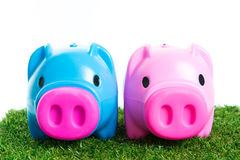 Piggy bank on green grass Stock Images