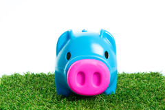 Piggy bank on green grass. And over white background Royalty Free Stock Photos