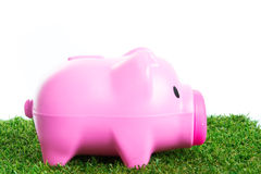 Piggy bank on green grass. And over white background Royalty Free Stock Photo