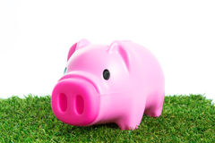 Piggy bank on green grass. And over white background Stock Photography