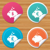 Piggy bank icons. Dollar, Euro, Pound moneybox. Round stickers or website banners. Piggy bank icons. Dollar, Euro and Pound moneybox signs. Cash coin money Royalty Free Stock Image