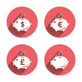 Piggy bank icons. Dollar, Euro, Pound moneybox. Piggy bank icons. Dollar, Euro and Pound moneybox signs. Cash coin money symbols. Pink circles flat buttons with Stock Image