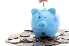 Piggy bank increasing your finance growing Stock Photography