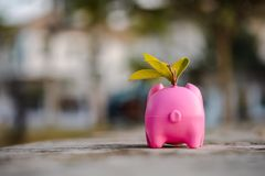 Piggy bank isolated outside on home background stock image