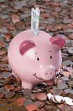 Piggy bank with money background. In studio Stock Photos