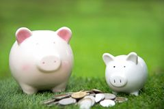 Piggy Bank Money Saving with the coins green background. Royalty Free Stock Images