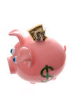 Piggy Bank with money; savings Stock Image