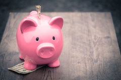 Piggy-bank /money savings / concept of growth. / american dollars Stock Images