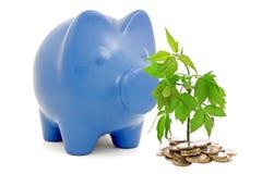Piggy bank and money tree Stock Photos