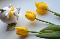 Piggy bank money and yellow tulips Royalty Free Stock Image