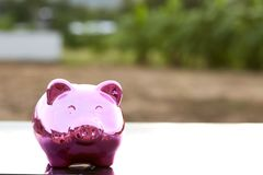 Piggy bank on nature background. Pink Piggy Bank In A Green Field  nature background Stock Image
