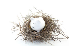 Piggy Bank Nest Egg. White piggy bank on mockingbird's nest with coins. Concept for nest egg and life savings. On white background Royalty Free Stock Images