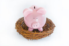 Piggy Bank in Nest Royalty Free Stock Photography